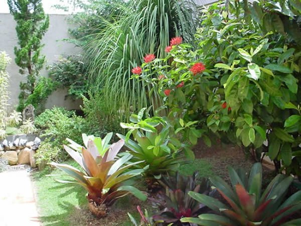 lateral das paredes com vasos de plantas de espécies com excelente