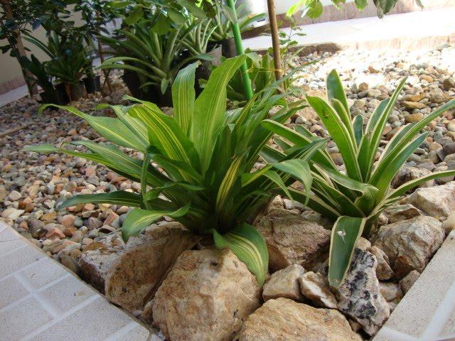 Jardins Residenciais Pequenos Related Keywords & Suggestions  Jardins